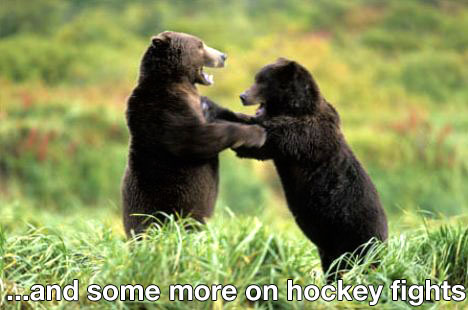 bearsfighting